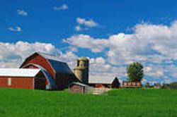 farm250